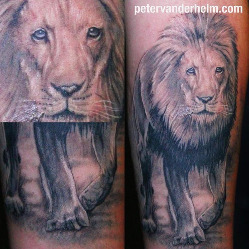 Realistic Lion 2